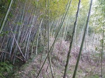 P1220237竹林境.JPG