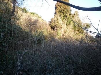P1220477イバラ・ツルが茂る平坦地.JPG