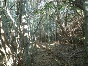 P1220480左竹林沿い.JPG