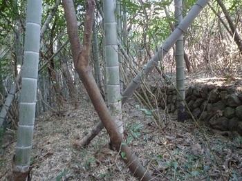 P1220507竹林に出会う.JPG