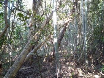 P1220509右側竹林の尾根境.JPG