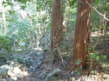 P1220535右岸側植林帯.JPG