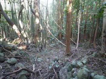 P1220536左岸側に竹林帯.JPG