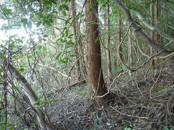 P1220548植林帯を右に巻く.JPG
