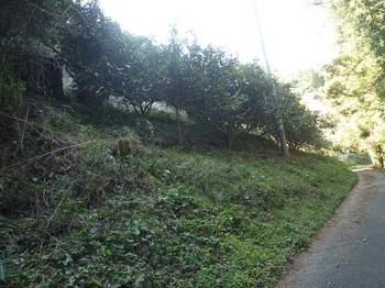 P1220551下降地付近の斜面.JPG