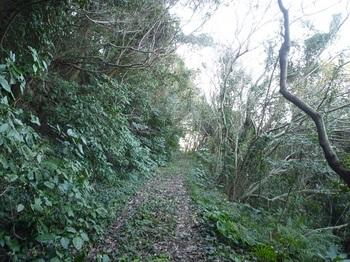P1220585落葉が覆う農道.JPG