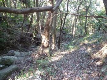 P1220588農道終点・谷沿いの踏み跡.JPG