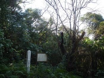 P1220597天然記念物ケグワ.JPG