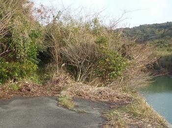 P1220919山道入口.JPG
