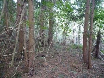 P1220939左のスギ植林帯へ逃げる.JPG