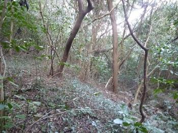 P1220943沢沿いの雑木疎林.JPG