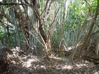 P1230052竹林の谷.JPG