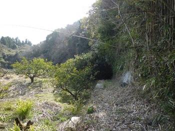 P1230084果樹園沿い.JPG