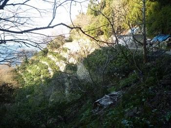 P1230138棚田斜面のミカン園.JPG