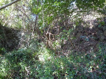 P1230161谷上方の石垣へ向かう.JPG