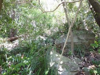 P1230167雑木尾根を登る.JPG