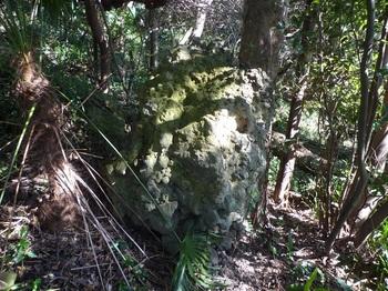 P1230170小集塊岩.JPG