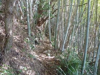 P1230174竹林沿い.JPG