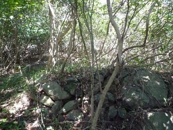 P1230179低い石垣・アオキヤブ尾根を登る.JPG