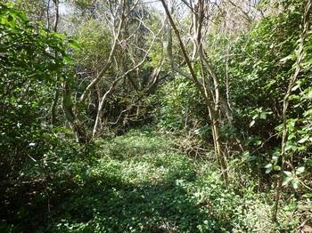 P1230212山道.JPG