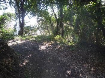 P1230225山道分岐(右へ).JPG