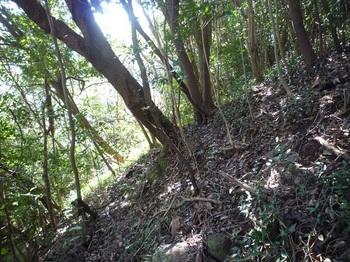 P1230227雑木疎林斜面.JPG
