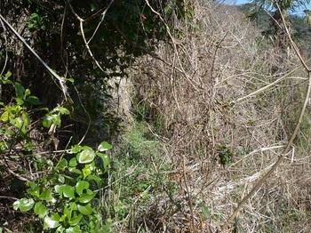 P1230236荒れ加減の山道.JPG
