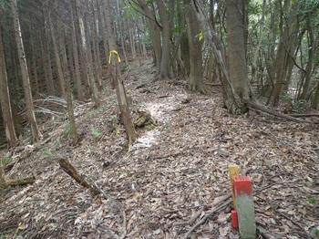 P1230275ヒノキ林境・巡視路合流(右から).JPG