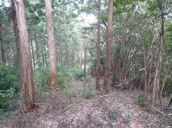 P1230313植林境の下り.JPG