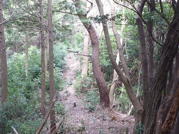 P1230318左側ヒノキ林境の細尾根.JPG