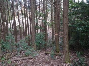 P1230337ヒノキ林境.JPG