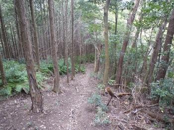 P1230345北西尾根のヒノキ植林境.JPG