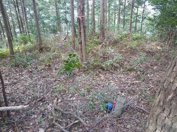 P1230360ヒノキ植林頂部.JPG