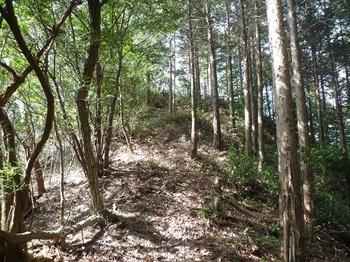 P1230363ヒノキ林境上り.JPG