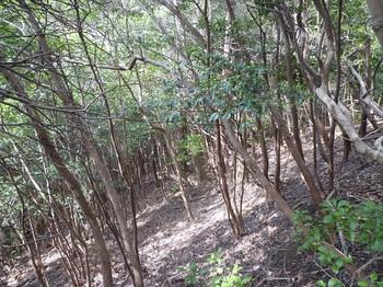 P1230376疎林をトラバース.JPG