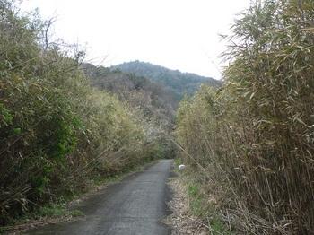 P1230524舗装道.JPG