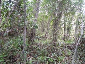 P1230537草被りの尾根.JPG