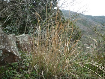 P1230549石のある平坦地(左横から).JPG
