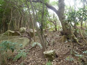 P1230705疎林斜面を登る.JPG