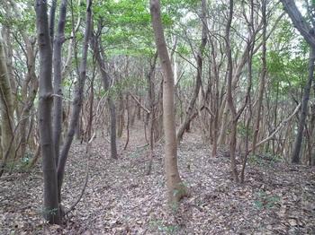 P1230717雑木疎林の平坦尾根.JPG
