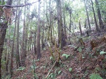 P1230769植林斜面.JPG