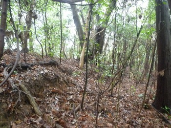 P1230771雑木疎林尾根へ上がる.JPG