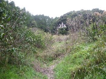 P1230879ツルに覆われた谷斜面.JPG