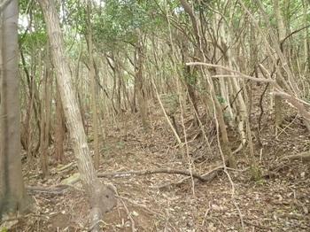 P1230960雑木疎林の古道.JPG