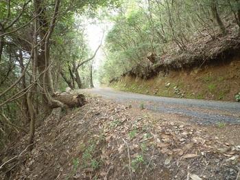P1230961再び舗装林道.JPG