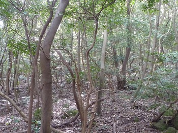P1230972雑木疎林.JPG