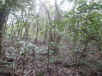 P1230973雑木疎林.JPG