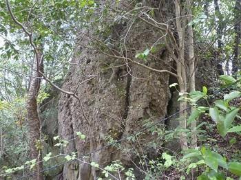 P1230999集塊岩(南側から).JPG