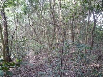 P1240051雑木疎林.JPG