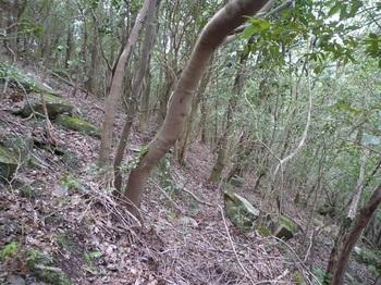 P1240056そま道(左方向).JPG